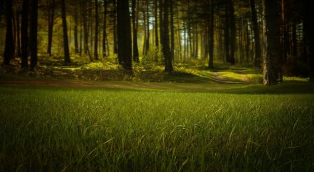 Powołano nową Radę Leśnictwa
