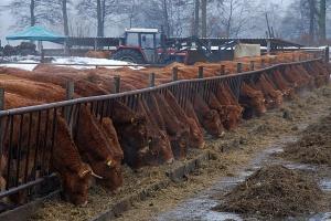 Europosłanka PiS: Unijna dyrektywa zawiera zapisy szkodliwe dla rolników