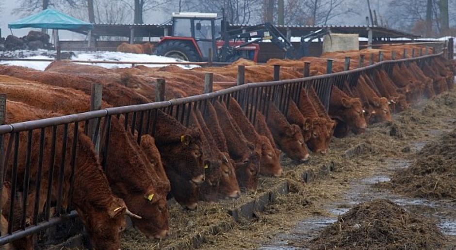 Europosłanka PiS: Unijna dyrektywa ws. zanieczyszczeń zawiera zapisy szkodliwe dla rolników