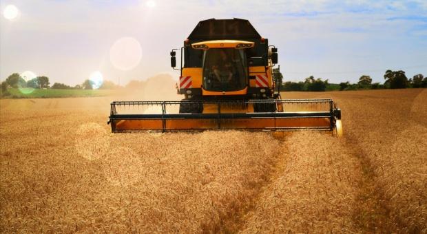 IGC: Nie będzie rekordu światowej produkcji zbóż