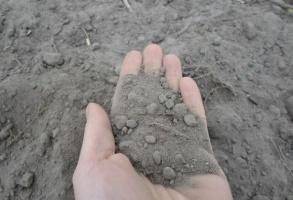 Zbilansowane nawożenie – rozwiązanie na suchy rok?