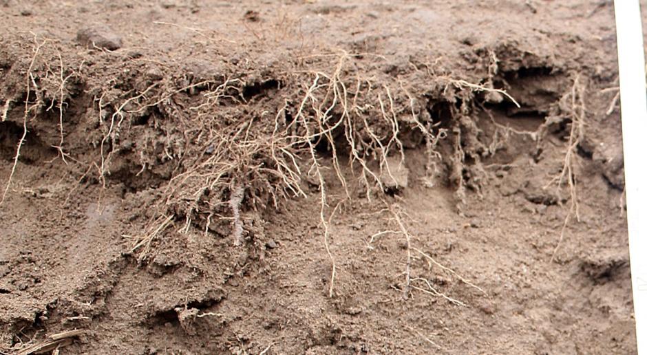 Susza spowodowała zatrzymanie wielu składników pokarmowych w glebie