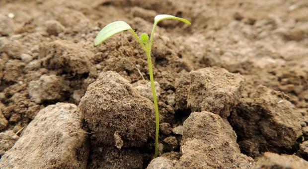 Pożyteczni mieszkańcy gleby