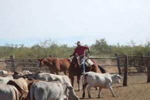 Australia: Największa farma krów mlecznych – sprzedana