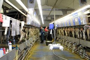 Będzie pomoc dla producentów mleka