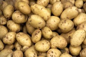 Dużo niższe zbiory ziemniaka niż przewidywano