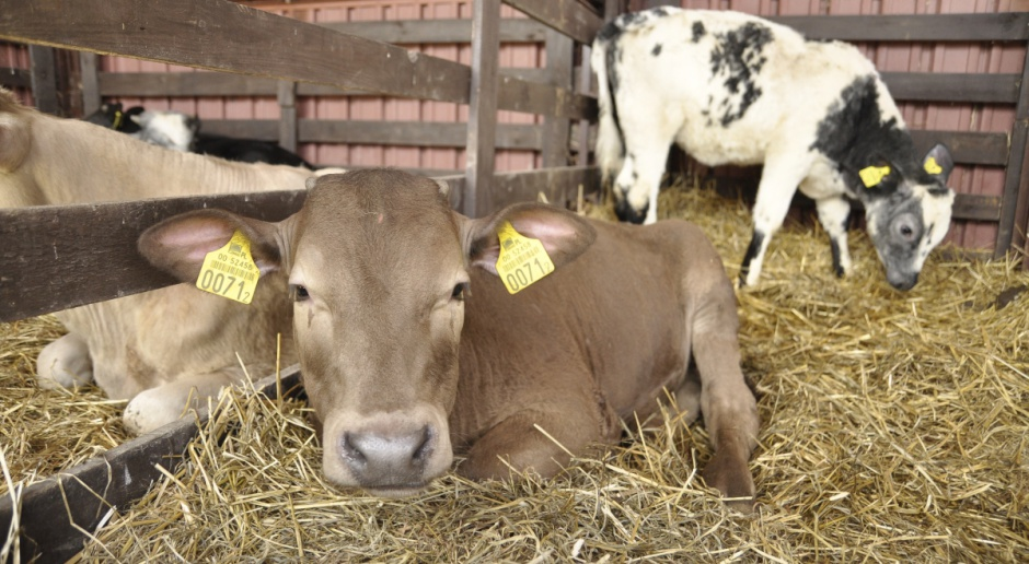 Hodują krowy i uprawiają ziemię. Weszli też w usługi opiekuńcze