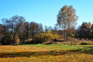 GUS: Grunty rolne i leśne zajmują 90 proc. kraju