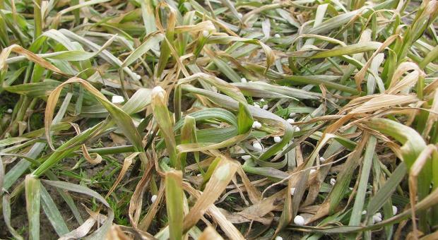 Dyrektywa azotanowa - ważne zmiany dla rolników?