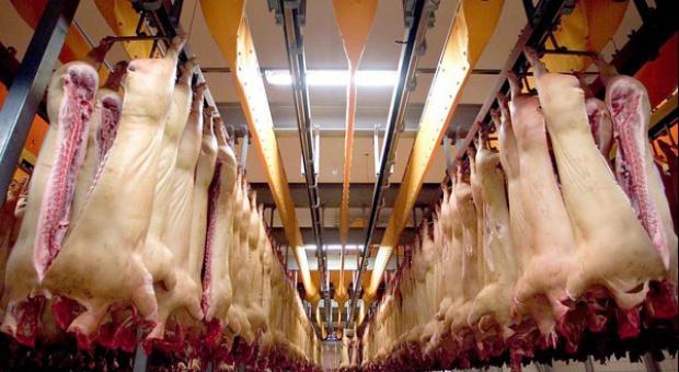 Produkcja Danish Crown na chwilę wstrzymana przez podejrzenie pomoru świń