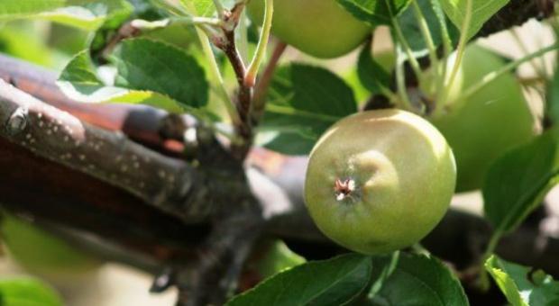 Maksymalne dawki nawozów azotowych dla upraw ogrodniczych
