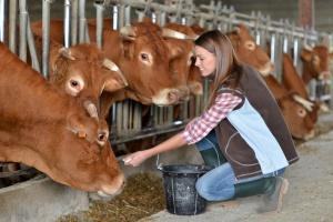 Zwiększa się opłacalność produkcji żywca wołowego