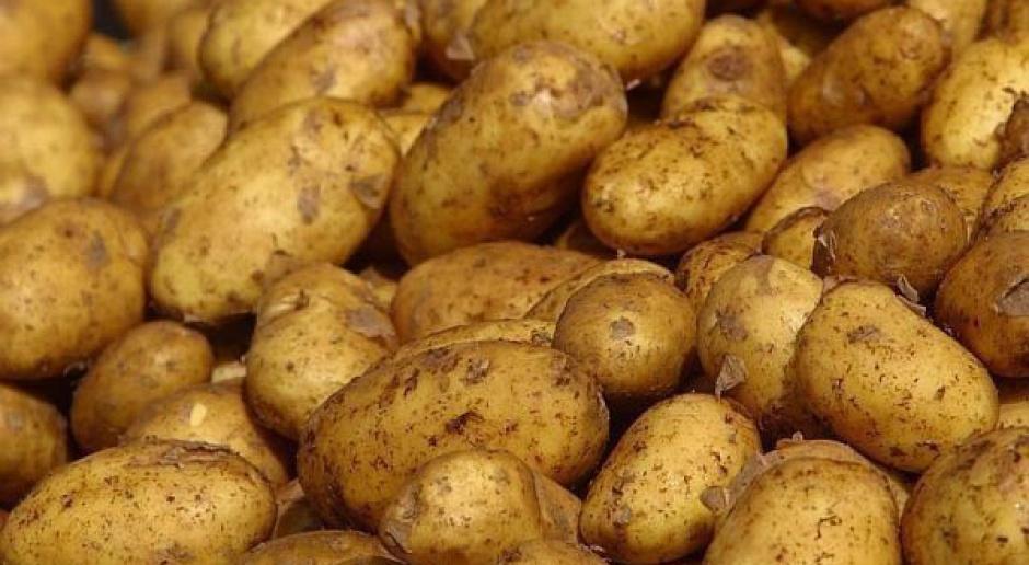 Kondycja bulw ziemniaka w przechowalni