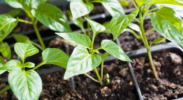 UE: Nowe regulacje dla importowanych roślin i produktów roślinnych
