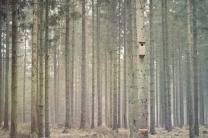 Zmiany ważne dla leśników wejdą w życie o rok później