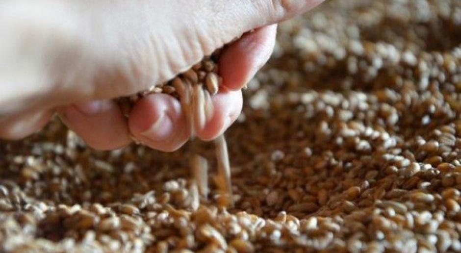 Ceny zbóż: Na koniec roku stagnacja w skupach