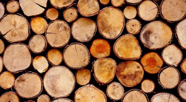 Sejm za czasową zmianą definicji drewna energetycznego
