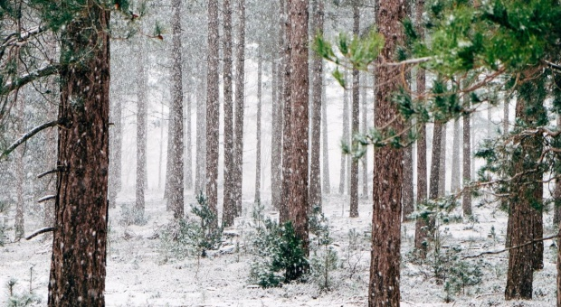 Siarka: Obecne założenia strategii leśnej UE znacznie zwiększyłyby obszary objęte ścisłą ochroną w Polsce