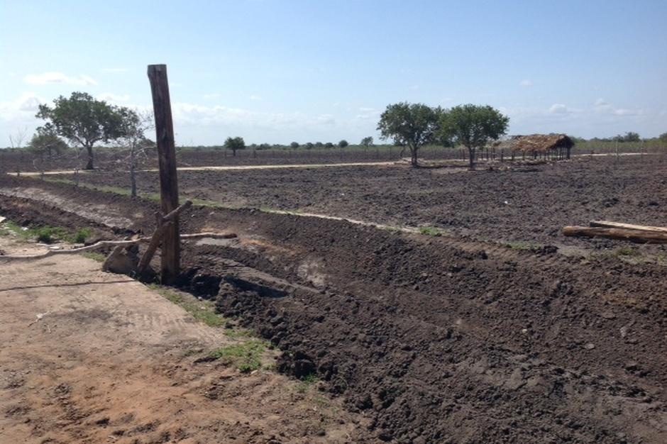 W Kenii odgórnie wytyczane są ogromne działki liczące często po kilka tysięcy hektarów bardzo żyznej ziemi. Na tak rozległym terenie zazwyczaj już od pokoleń gospodaruje kilkuset rolników, którzy teraz otrzymują szansę połączenia się w grupę producencką