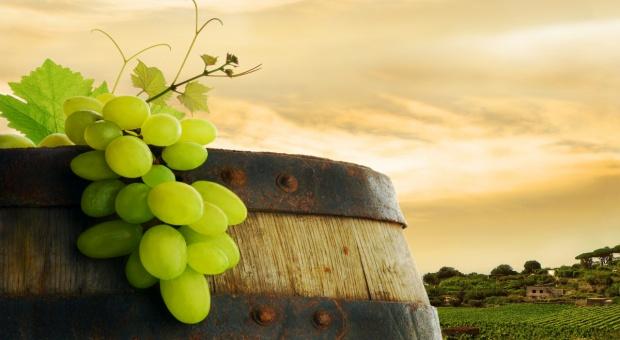 Upływa czas składania deklaracji dla branży winiarskiej
