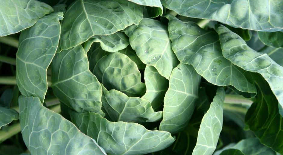 Droższe warzywa na rynku hurtowym w Broniszach