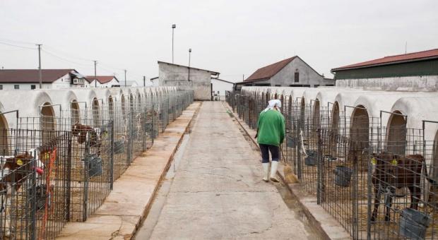 Obwód Kaliningradzki szansą dla polskich inwestorów z branży rolniczej