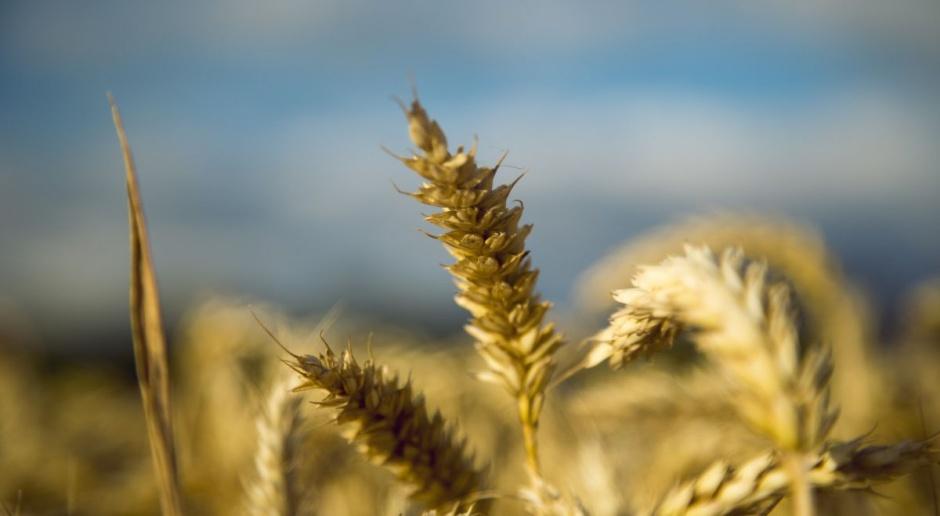 Subiektywne podsumowanie tygodnia notowań zbóż
