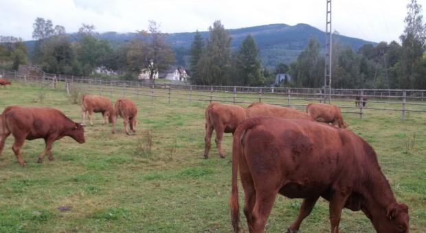 Umowa z  Mercosur zagrożeniem dla unijnych rolników
