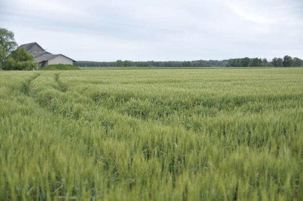 Słaby początek roku na rynku surowców rolnych