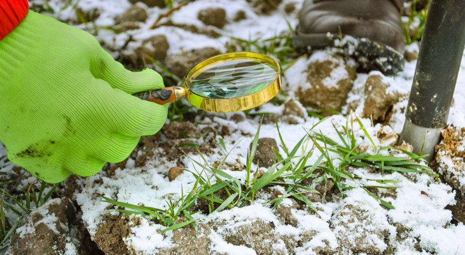 Lustracja pszenicy ozimej i ocena stanu roślin