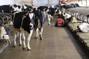 Polska złoży wniosek do KE o podjęcie interwencji na rynku mleka