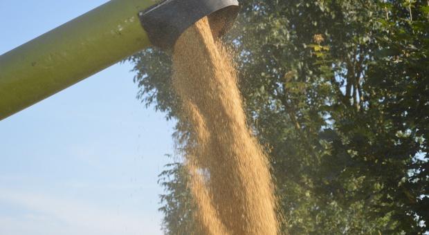 FAO: Najnowsza prognoza zużycia i zapasów zbóż