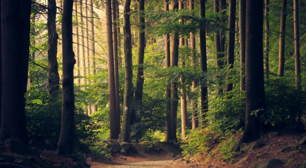 Albania wprowadza 10-letnie moratorium na wycinkę lasów