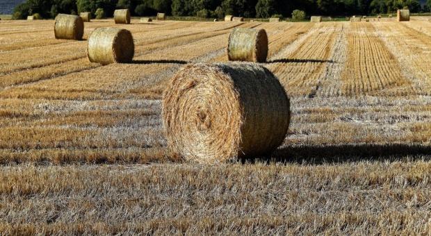 Rosja może w 2016 r. zostać liderem w eksporcie pszenicy