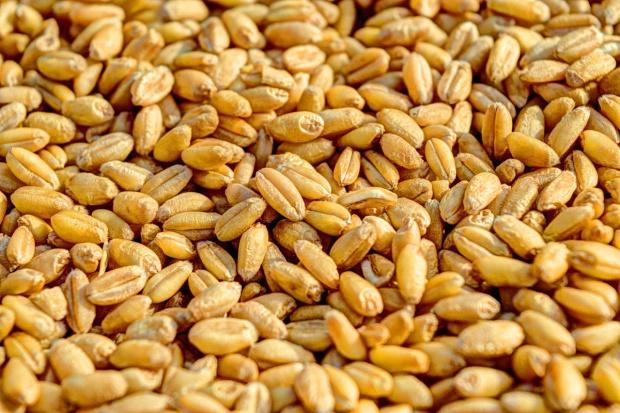 USDA: Prognoza wzrostu światowych zapasów pszenicy