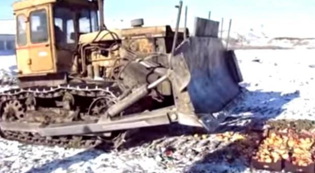 Rossielchoznadzor tropi i niszczy polskie jabłka nawet na Syberii