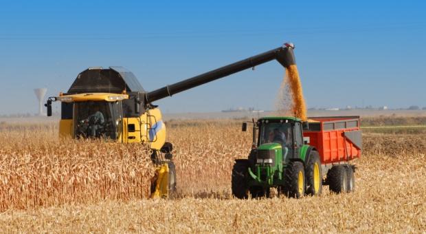Ukraina: Większy eksport zbóż i rekordowa produkcja oleju słonecznikowego