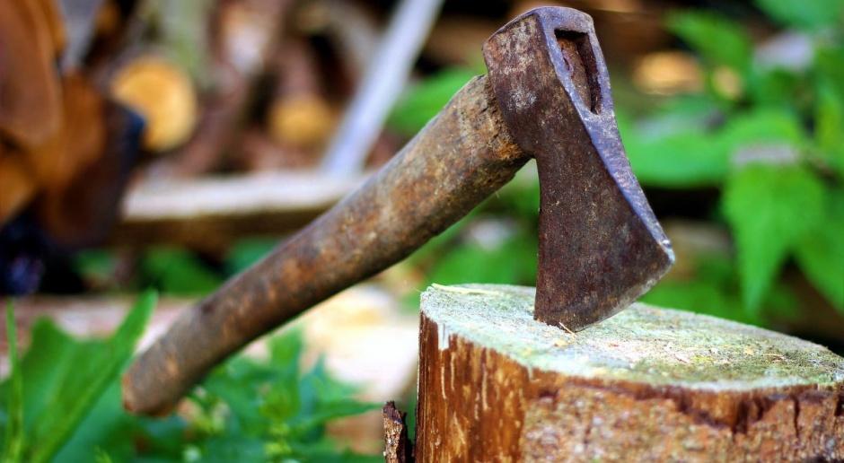 Czy na prywatnej działce można będzie bez zezwolenia usuwać drzewa?