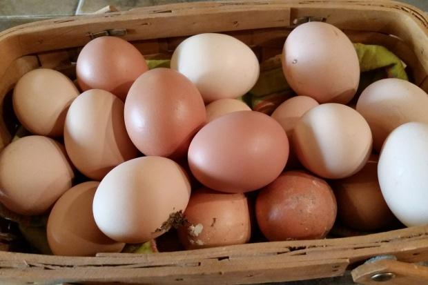 Dioksyny w jajach… niekoniecznie ekologicznych