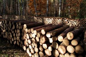 Podkarpacie: Leśnicy zadowoleni z przetargu na sprzedaż drewna