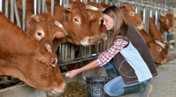 Jaki system żywienia krów zasuszonych wybrać?