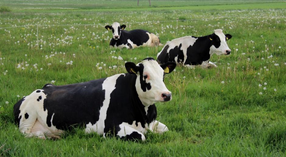Dziś rusza nabór wniosków o nadzwyczajne wsparcie w sektorze mleka i wieprzowiny