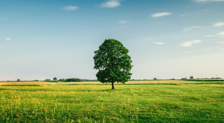 Uwagi do ustawy: Nadmiernie ogranicza obrót nieruchomościami rolnymi