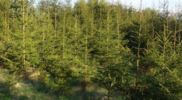 Powtarzalna niezgodność w zalesianiu będzie tańsza