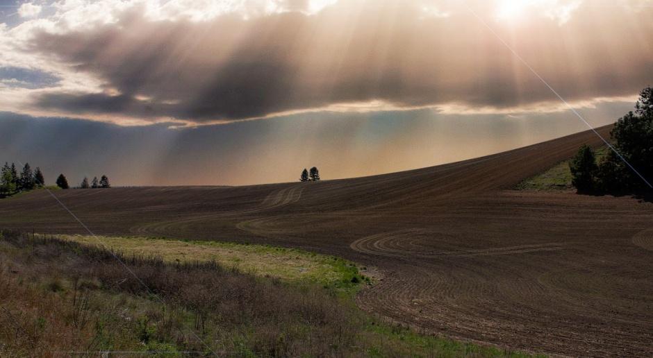 Rumunia: Gwałtowny wykup ziemi przez obcokrajowców