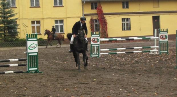 Będzie nowa organizacja wyścigów konnych