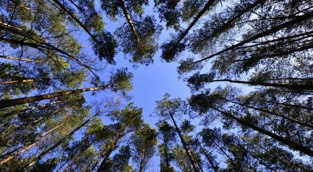 Komisja środowiska proponuje zmiany dot. Państwowej Rady Ochrony Przyrody