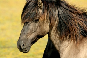 Projekt noweli ustawy dot. rejestracji koni w II czytaniu - bez poprawek
