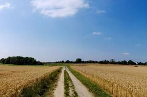 PO i PSL zapowiadają skierowanie do TK rozwiązań ws. sprzedaży ziemi