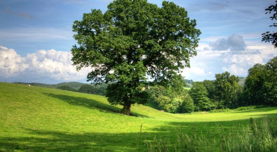 Sejm nie zgodził się na odrzucenie projektu ws wstrzymania sprzedaży ziemi